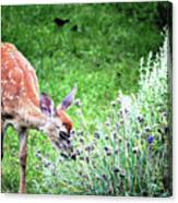 Fawn Visits Flowers Canvas Print