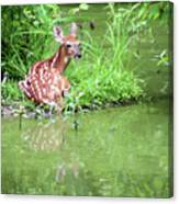 Fawn White Tailed Deer Wildlife Canvas Print