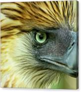 Fearless Philippine Eagle Canvas Print