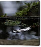 Floating On A Still Pond Canvas Print
