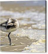 Feather Bed Canvas Print