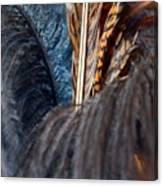 Feather Fun Canvas Print