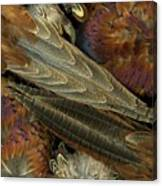 Featherdance Canvas Print