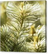Featherheads Canvas Print