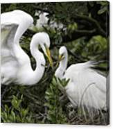 Feathering Their Nest Canvas Print