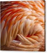 Feathers Of Pink Canvas Print