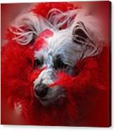 Feathers Of Red Canvas Print