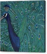 Feathery Fan Canvas Print