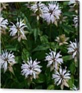 Feathery Petal Flowers Canvas Print