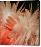Featherz Canvas Print