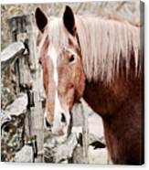 February Horse Portrait Canvas Print