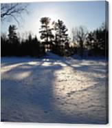 February Pine Tree Shadows Canvas Print
