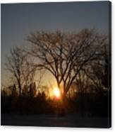 February Sunrise Behind Elm Tree Canvas Print