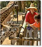 Feeding Giraffe 3a Canvas Print