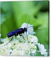 Feeding Insect Canvas Print