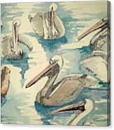 Feeding Pelicans Canvas Print