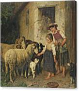 Feeding The Sheep Canvas Print