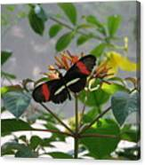 Feeding Time - Butterfly Canvas Print