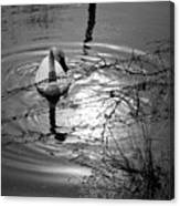 Feeding Trumpeter Swan In Black And White Canvas Print