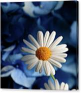 Feeling Blue Daisies Canvas Print