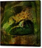 Feeling Froggy Canvas Print