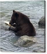 Feasting Bear Canvas Print