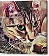 Feline Fancy Canvas Print