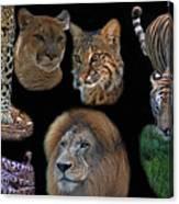 Feline Montage Canvas Print
