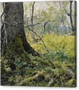Fell Plants Canvas Print
