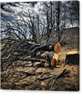 Felled After The Wildfire Canvas Print