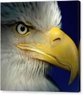 Female Bald Eagle Alaska Canvas Print