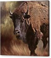 Female Buffalo Canvas Print