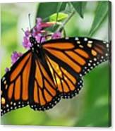 Female Butterfly Canvas Print