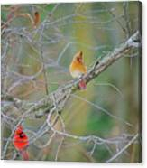 Female Cardinal And Friends Canvas Print