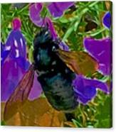 Female Carpenter Bee On Penstemons Canvas Print