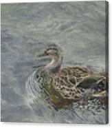 Female Duck Canvas Print