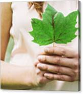 Female Hands Holding Leaf Canvas Print