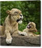 Momma Lion Over Cubs Attitude Canvas Print