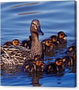 Female Mallard Duck With Chicks Canvas Print