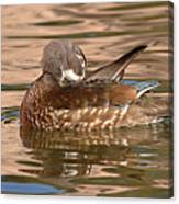 Female Wood Duck Preening On The Water Canvas Print