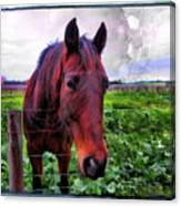 Fence Chat Canvas Print