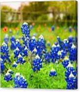 Fence Me In With Flowers Canvas Print