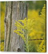 Fence Post Canvas Print