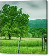 Fence Row And Tree Canvas Print
