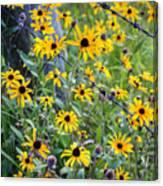 Fence Row Flowers Canvas Print