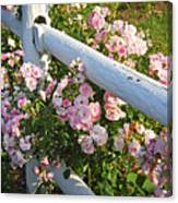 Fence With Pink Roses Canvas Print
