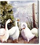Fenced In Quackers Canvas Print