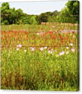Fenced In Wildflowers Canvas Print