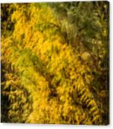 Fens In Fall Color Canvas Print