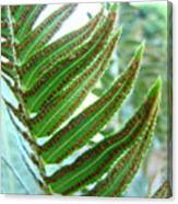 Fern Art Print Green Forest Ferns Baslee Troutman Canvas Print